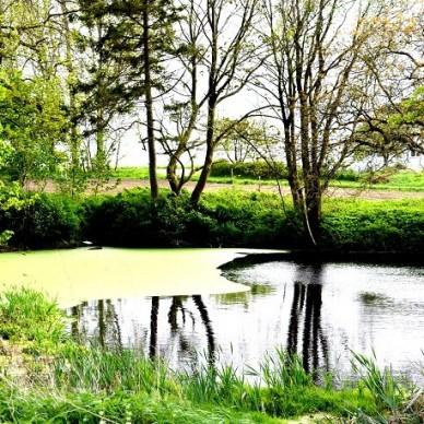 6.601 m² Bauland mit Teich, nahe Ostsee