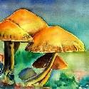 Pilz, Pilze, Mushrooms, 蘑菇  - Kunst zum mieten, leihen