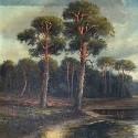 Wald & Landschaft